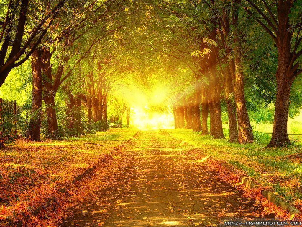 Autumn Scenes Wallpapers 1024x768