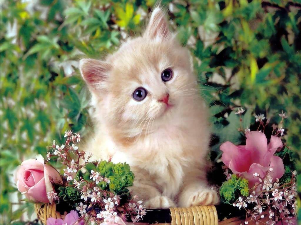 hd cat wallpaper cute cat wallpaper cat wallpaper baby cat wallpaper 1024x768