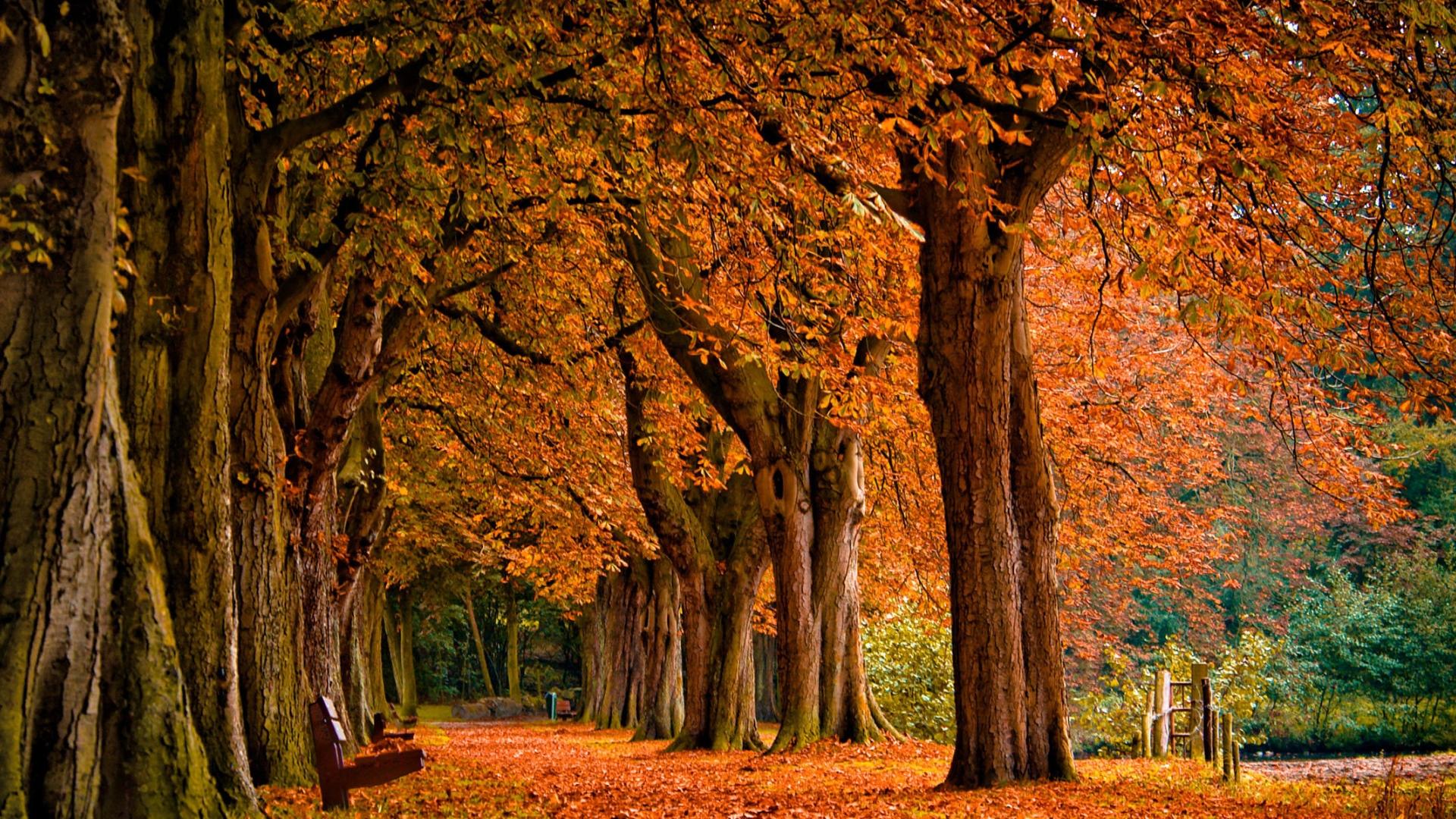 <b>Autumn Backgrounds Wallpaper Desktop</b> #6992144