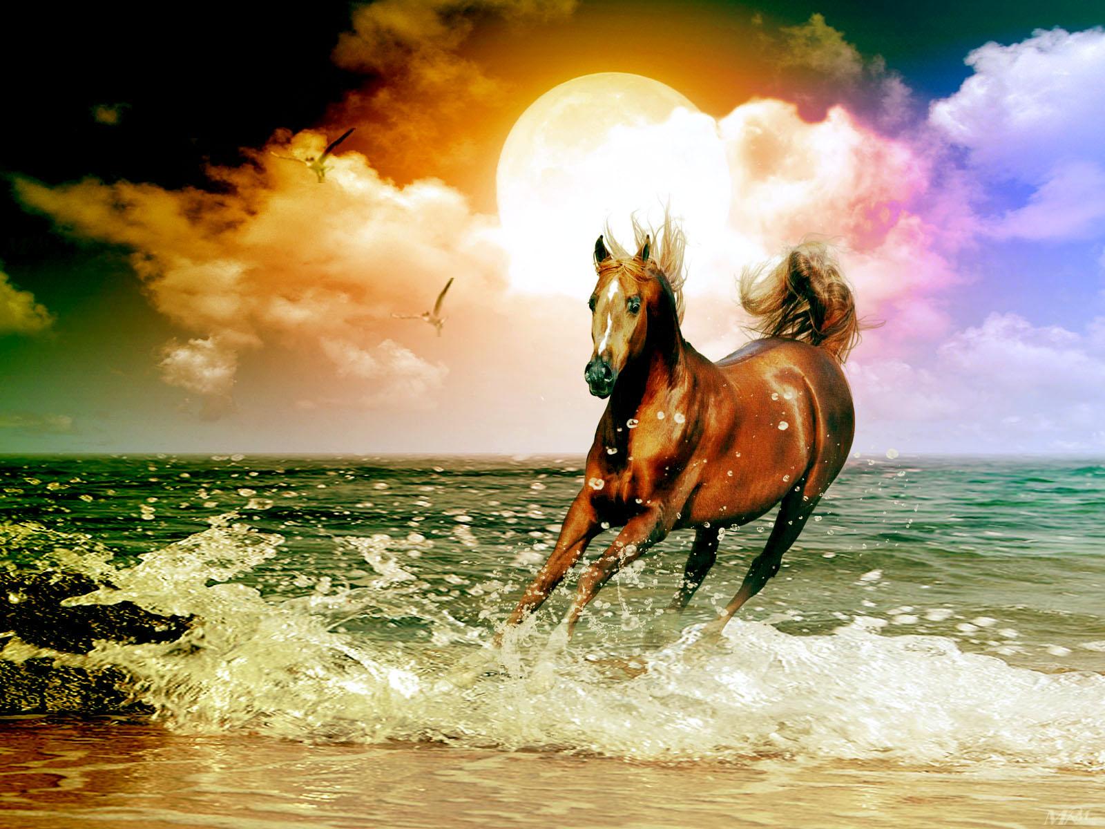 in sun set wallpaper horse running wallpaper horse jumping wallpaper 1600x1200