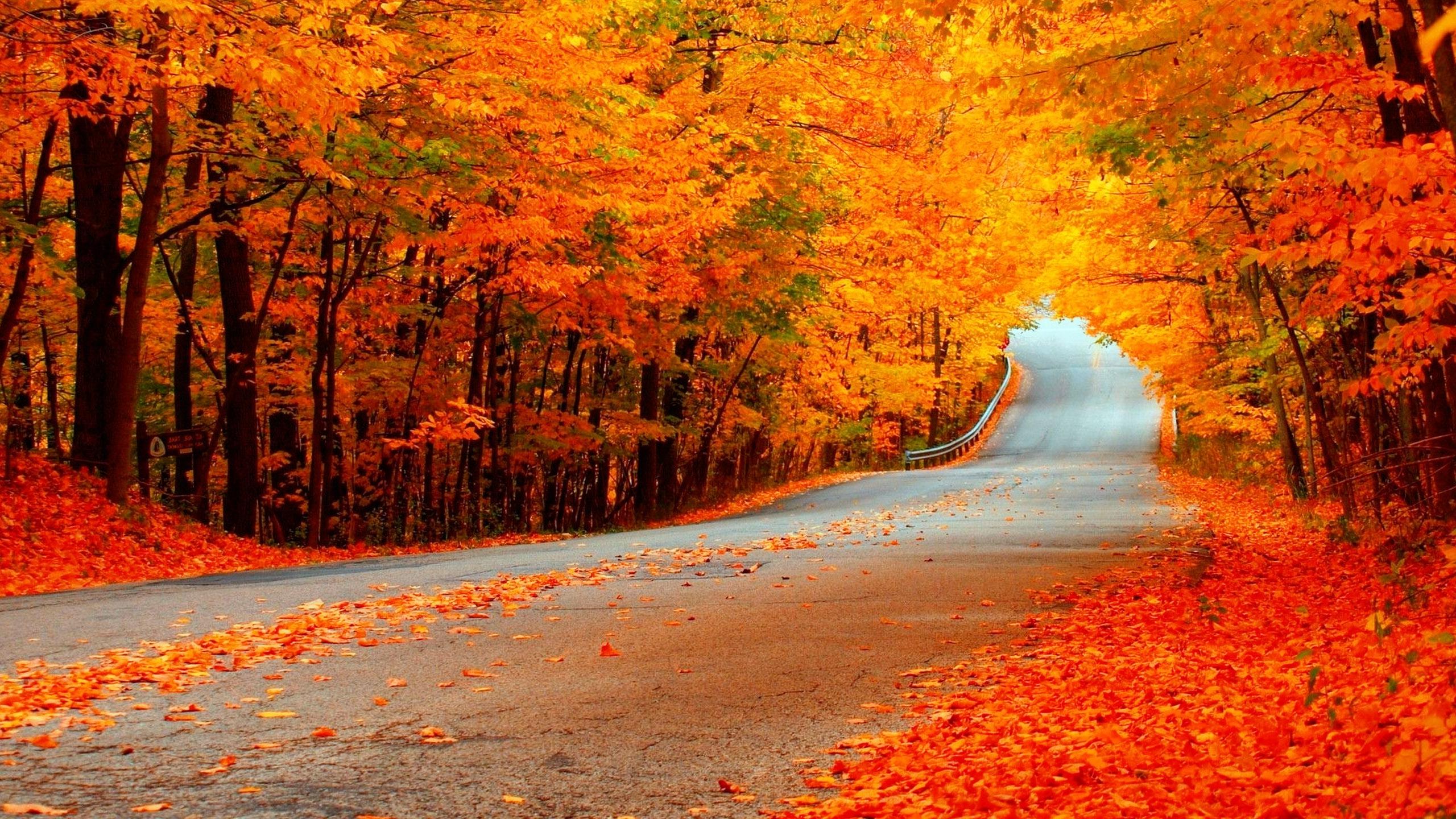 Free Download Fall Wallpaper Hd Fond Ecran Hd 2560x1440