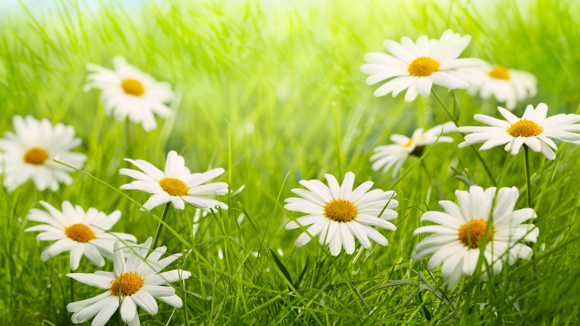 Beautiful spring wallpaper for desktop wallpapersafari - Backgrounds springtime ...