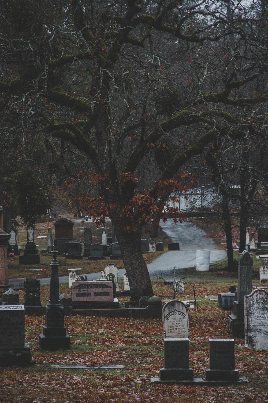 750 Graveyard Pictures Download Images on Unsplash 1000x1500