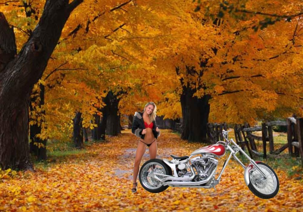 Bikes Wallpapers Harley Davidson Wallpapers Beautiful Girls 1000x700