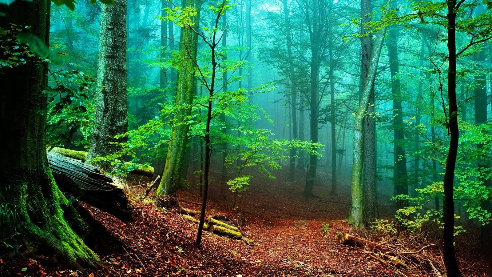 Beautiful Desktop Photo Forest Desktop Wallpaper 10803 1600x900