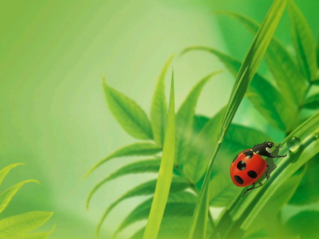 Cartoon Ladybug Wallpaper Wallpapersafari