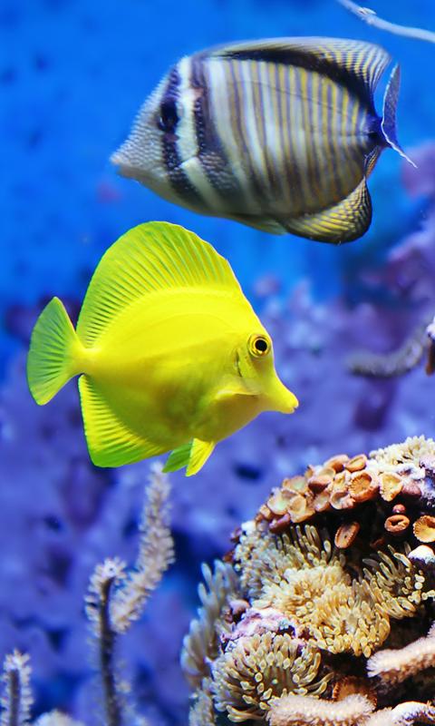 Fish Aquarium Live Wallpaper Wallpapersafari