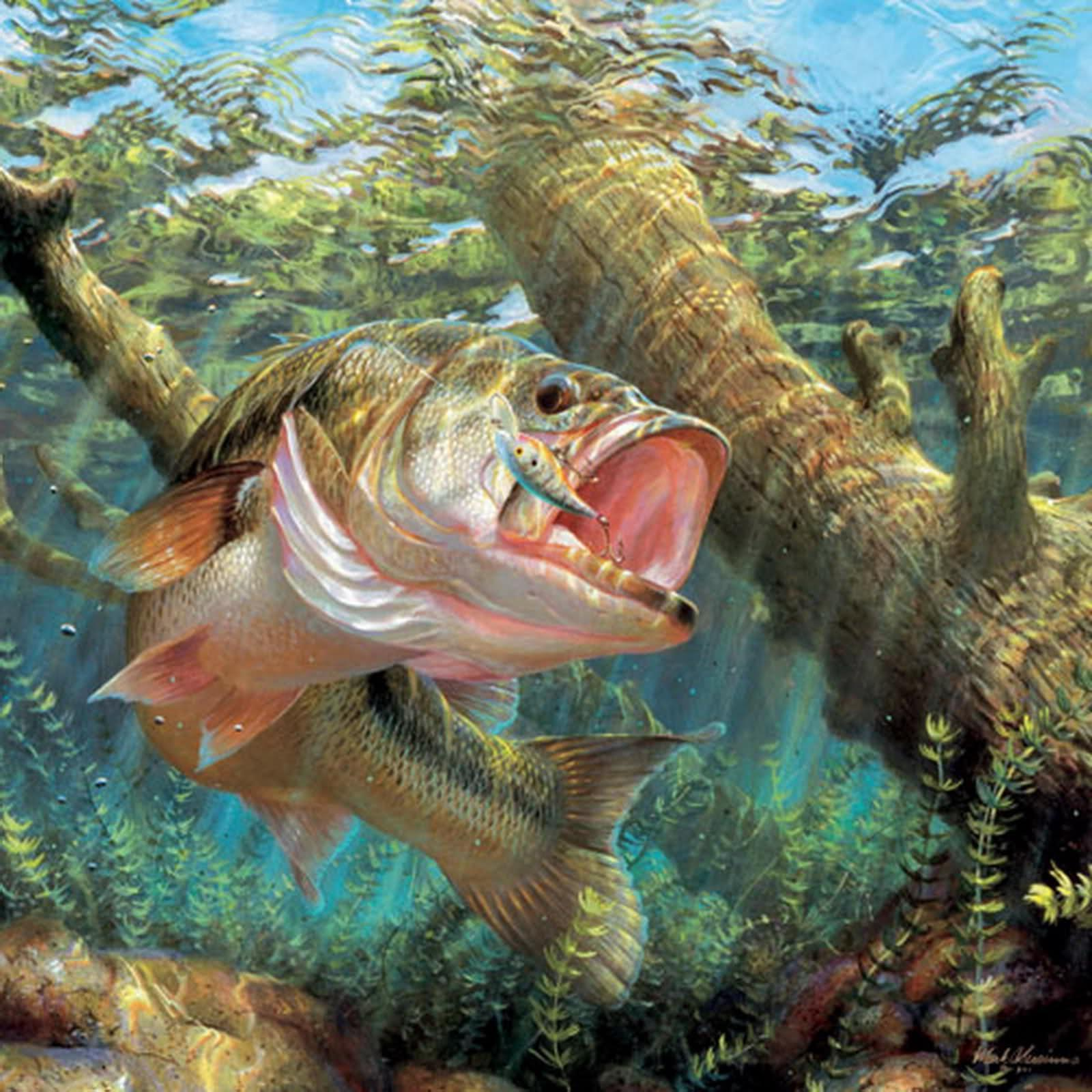 Largemouth Bass Wallpapers 1600x1600