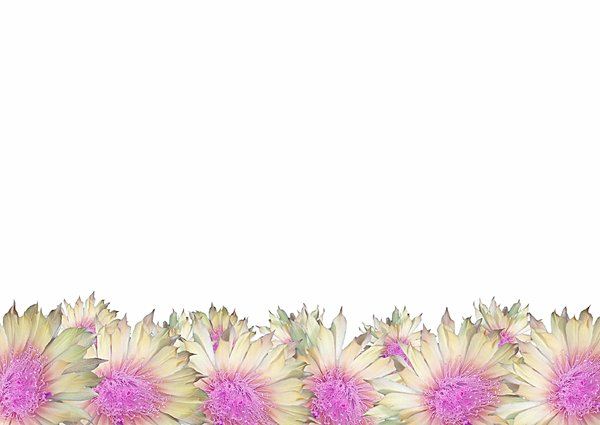 Flower Border 1 Pretty border of flowers Photo and graphic None of 600x425