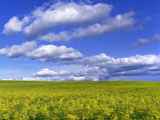 Download Field With Flowers Under The Sky Wallpaper Apps Directories 533x400