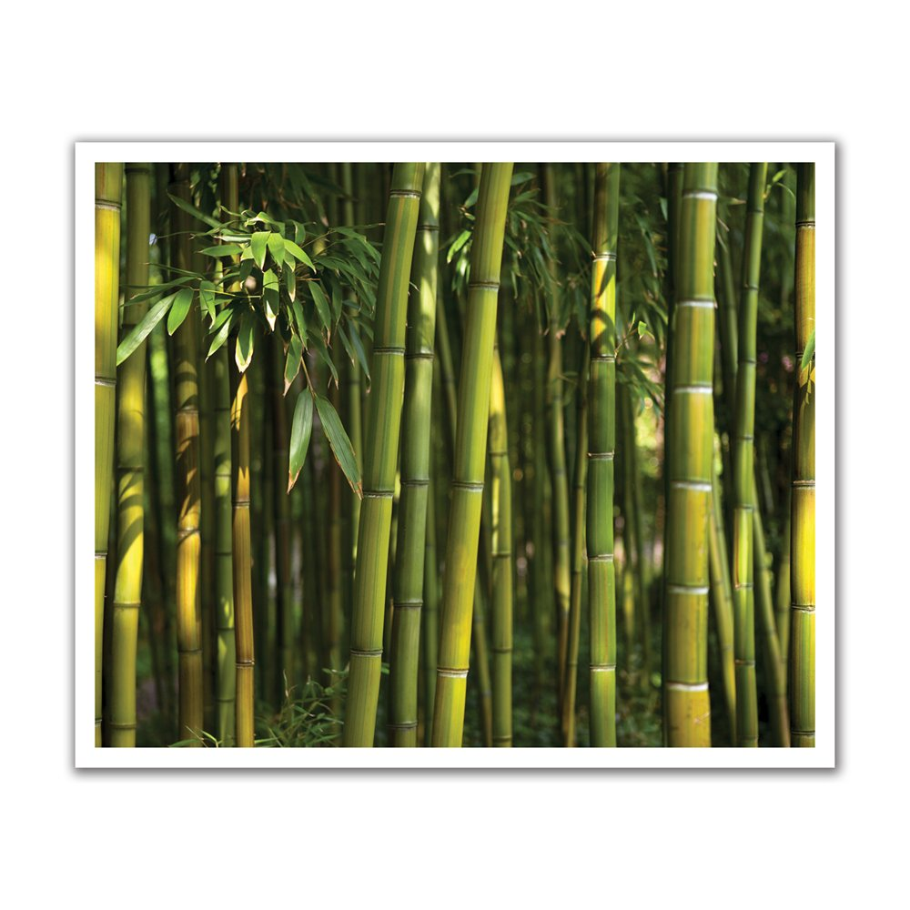 Forest Green Peel and Stick Removable Wall Decal Mural Lowes Canada 1000x1000