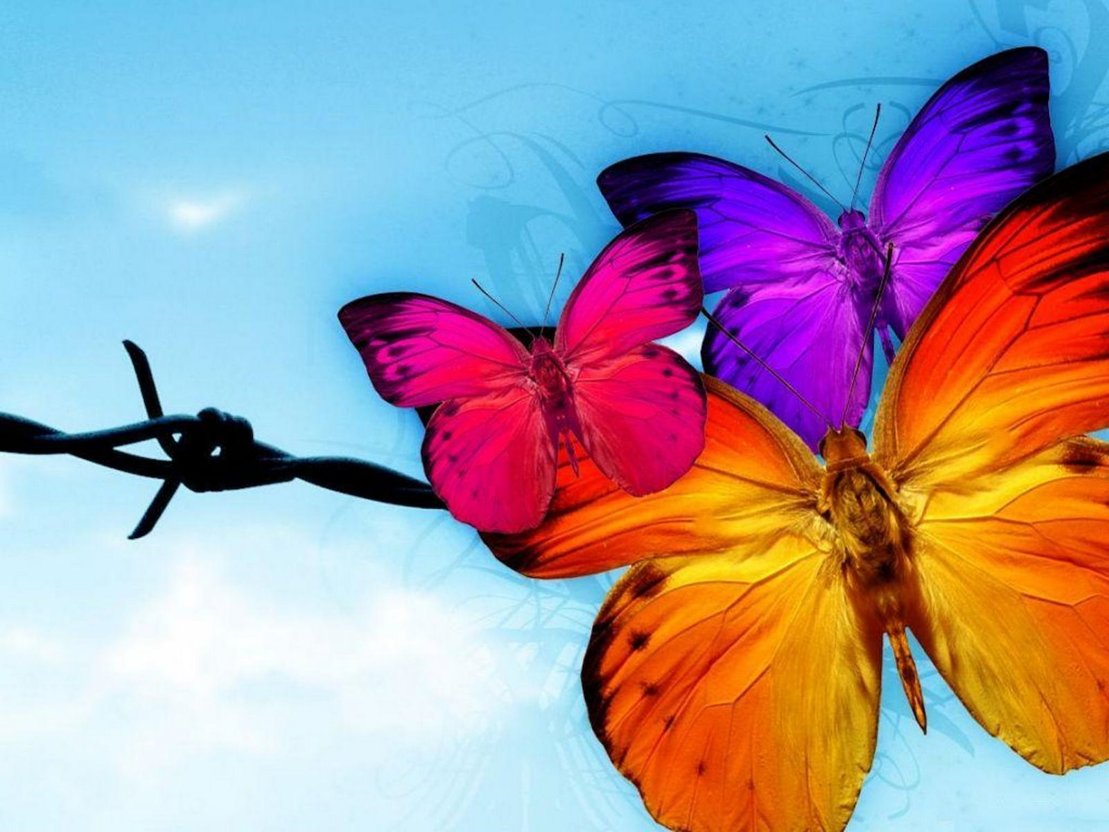 Very Sweet and Cute Animals butterfly wallpaper 1600x1200