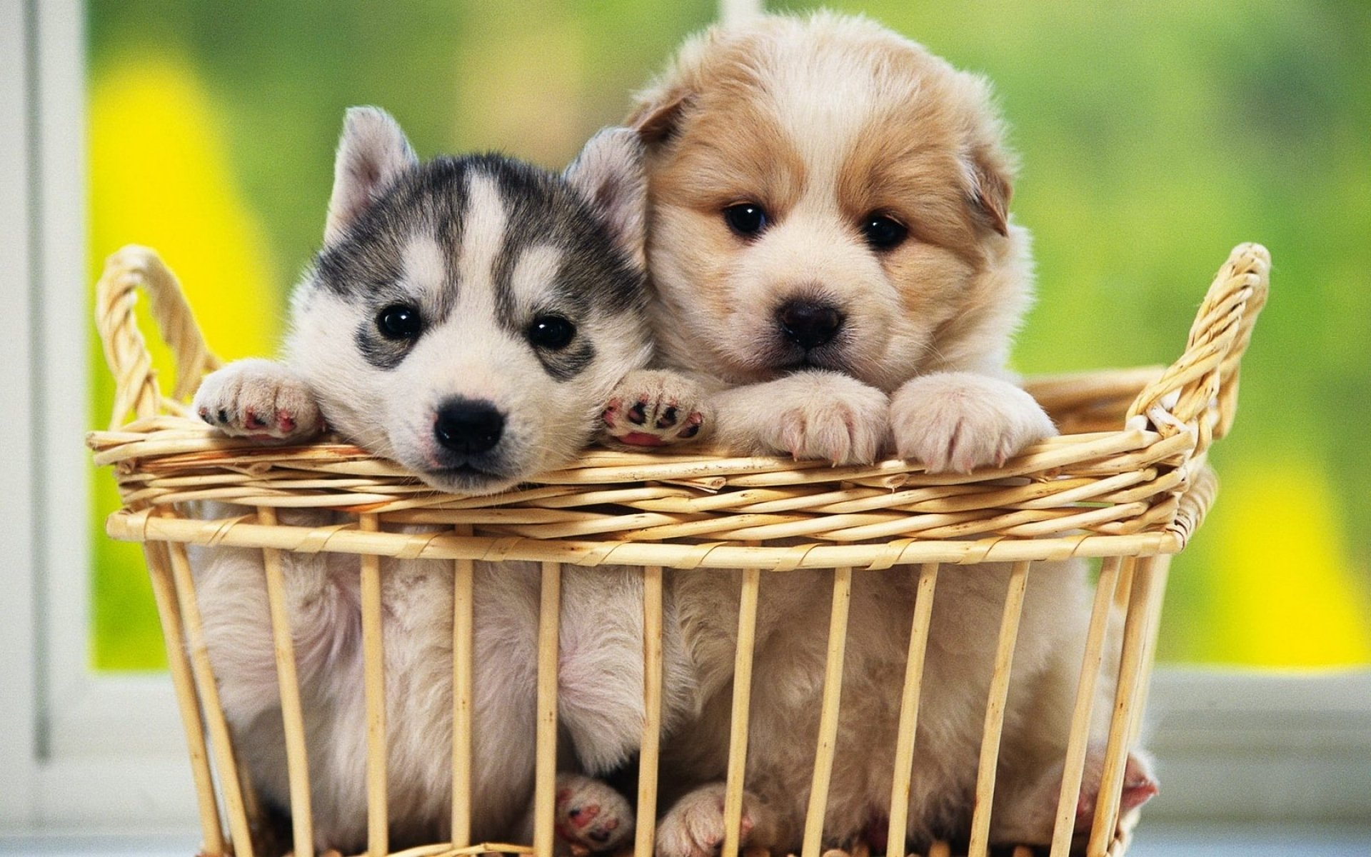 2650 Dog HD Wallpapers Background Images 1920x1200