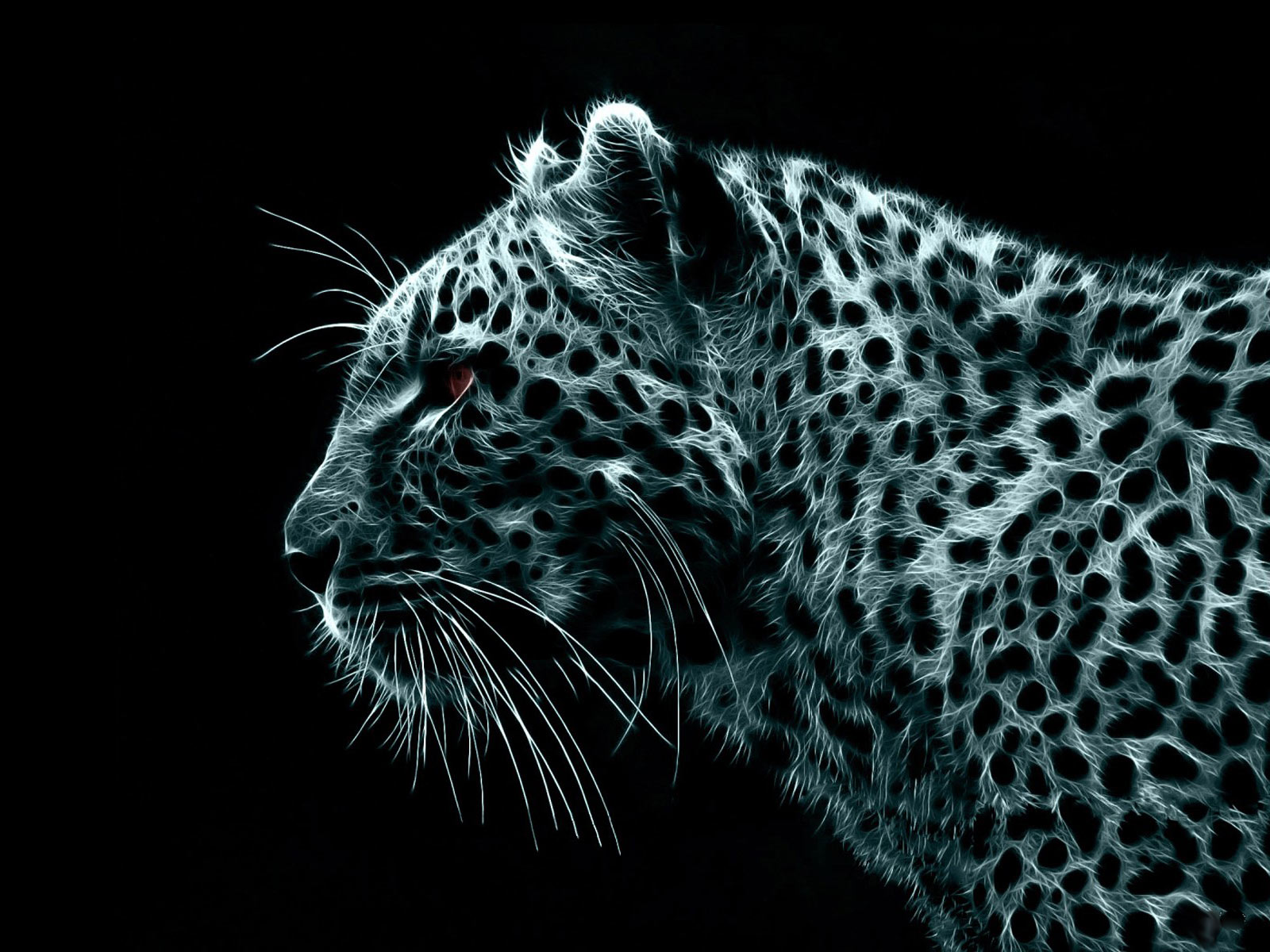 Black Leopard Wallpaper Top Quality Wallpapers 1600x1200