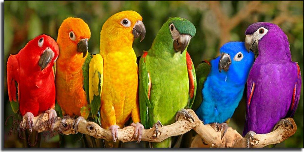 Parrot Wallpapers 26 WallpapersExpert Journal 1200x600