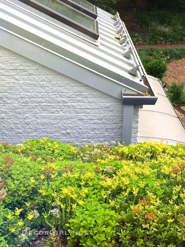 roof with live plants has the same effect as installing wallpaper 638x850