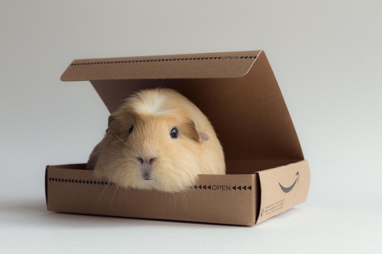 Cute Guinea Pig In A Box Hd Wallpaper Wallpaper List 3000x2000