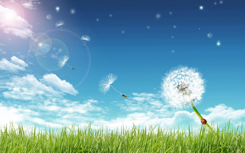 Grass Blue Bright Sky And A Dandelion Backgrounds For PowerPoint 1024x640