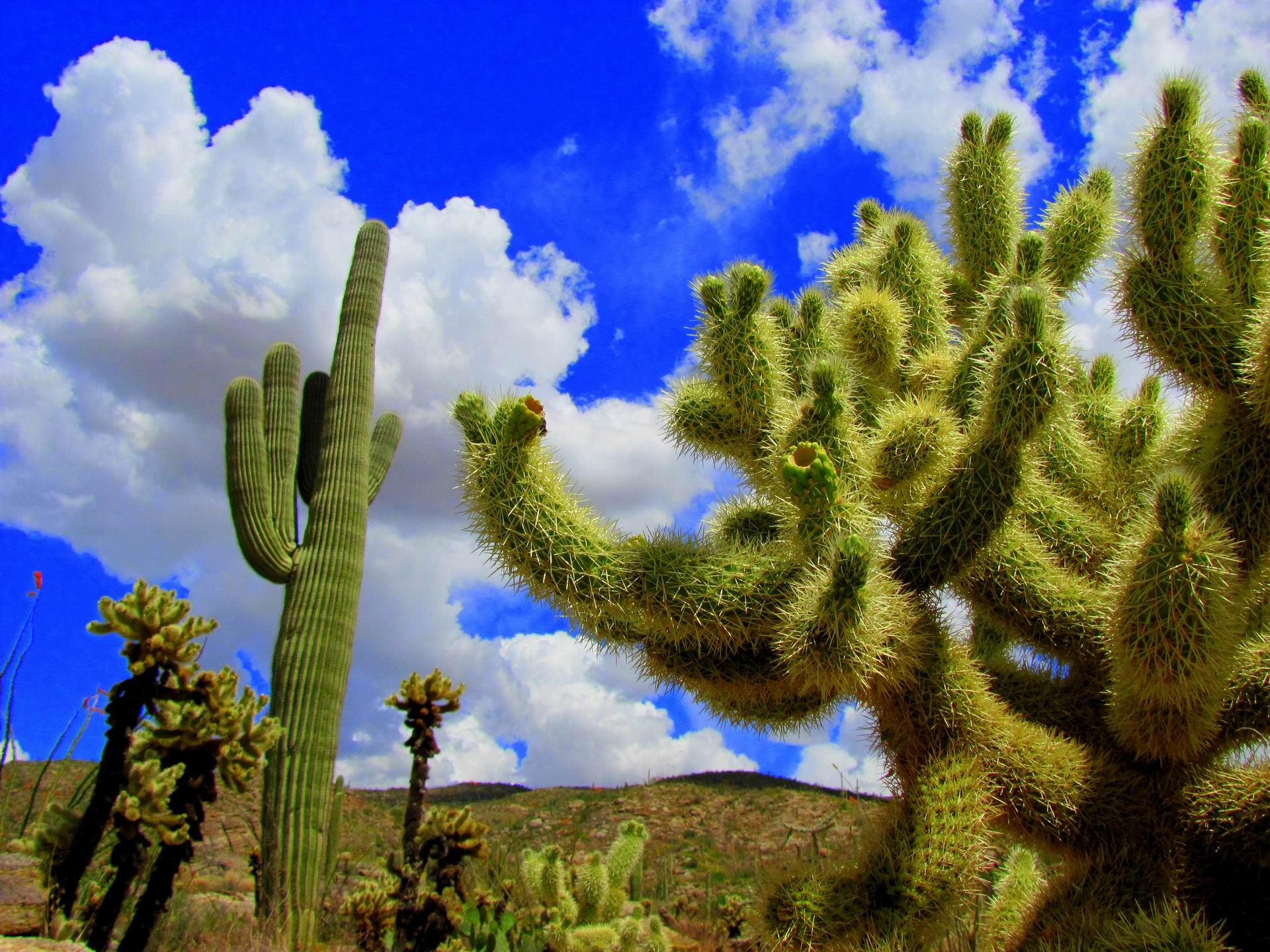Best 41 Saguaro National Park Wallpaper on HipWallpaper 1920x1440