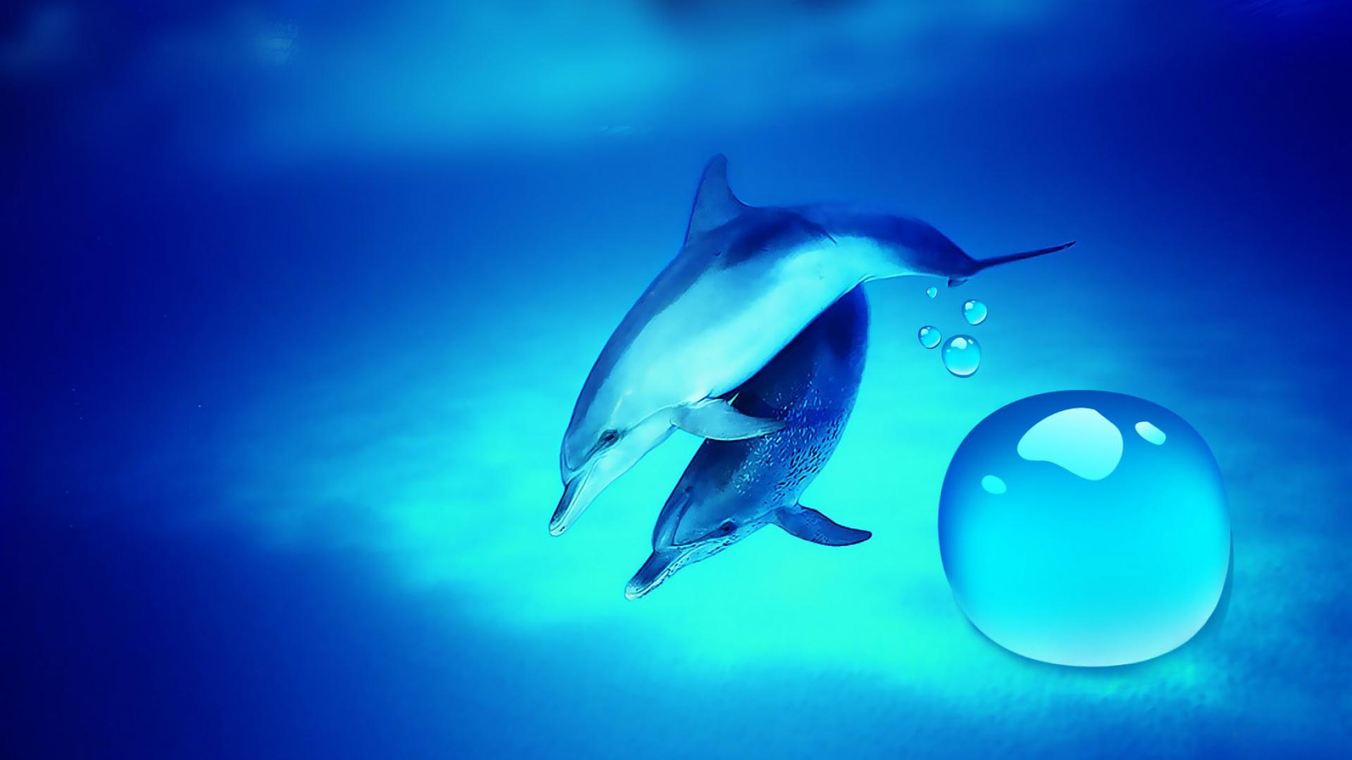 dolphin desktop wallpaper 7732 hd wallpapers in animals imagesci com