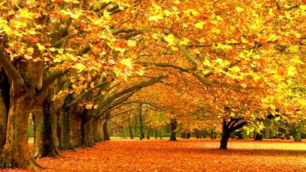 parks 1600x900 wallpaper Autumn Wallpapers Desktop Wallpapers 600x337