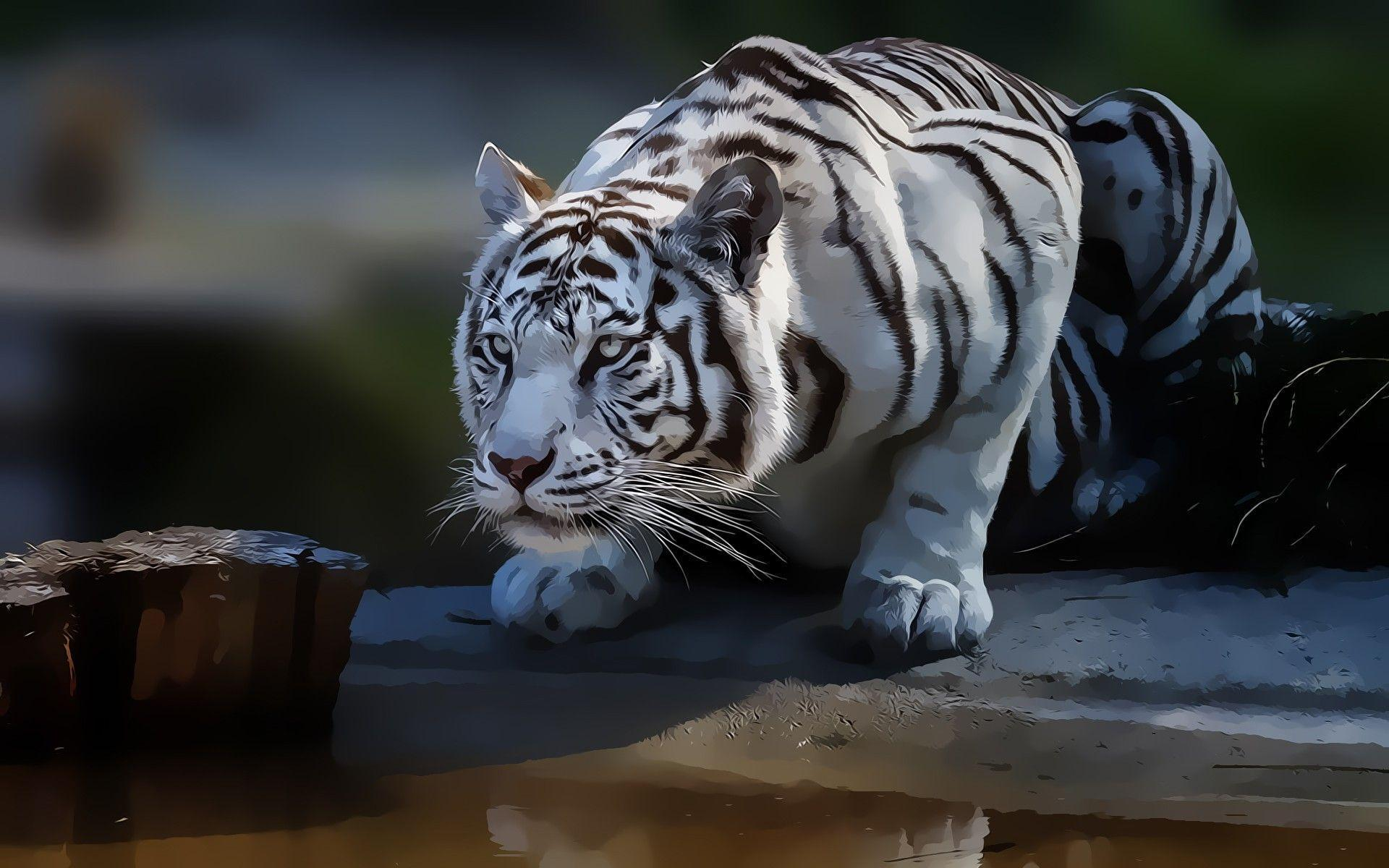 White Tiger Wallpapers HD 1920x1200