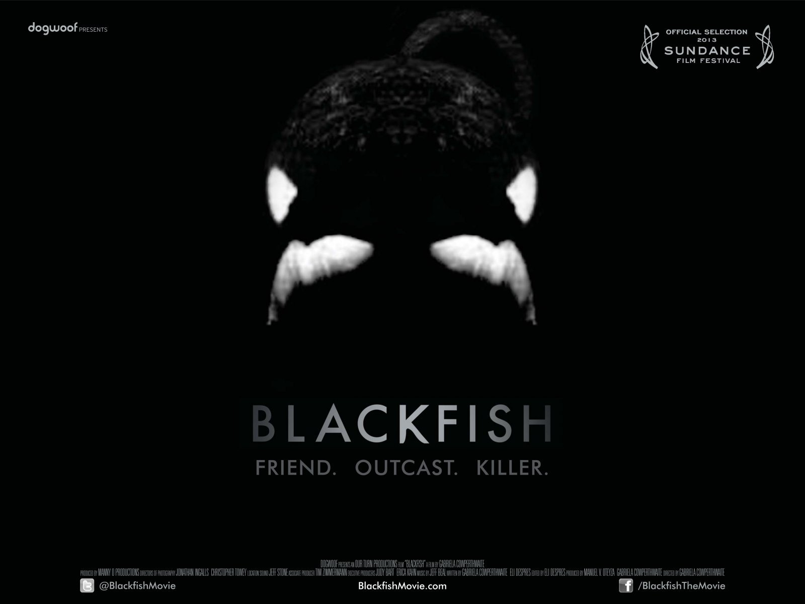 Blackfish   Film Review   Everywhere 1600x1200