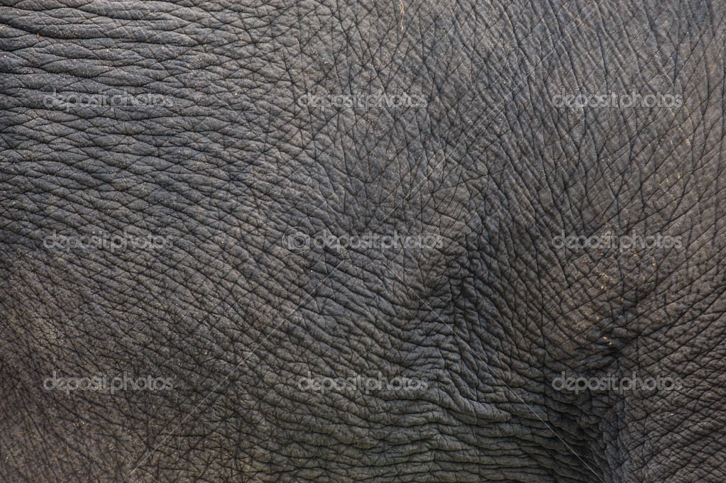 Elephant Skin Texture Elephant Skin Texture Closeup 1023x681
