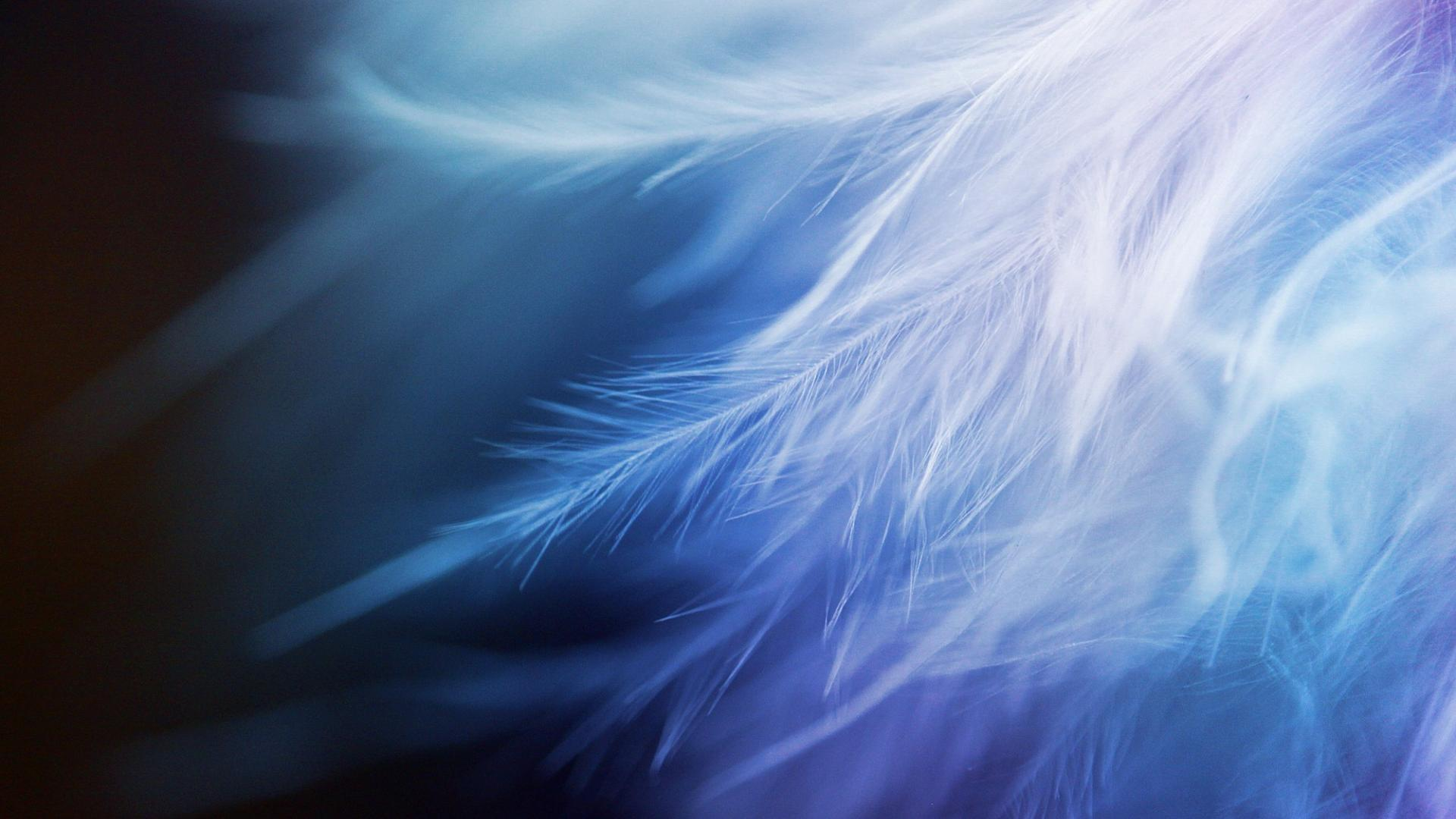 Abstract feathers wallpaper 66106 1920x1080