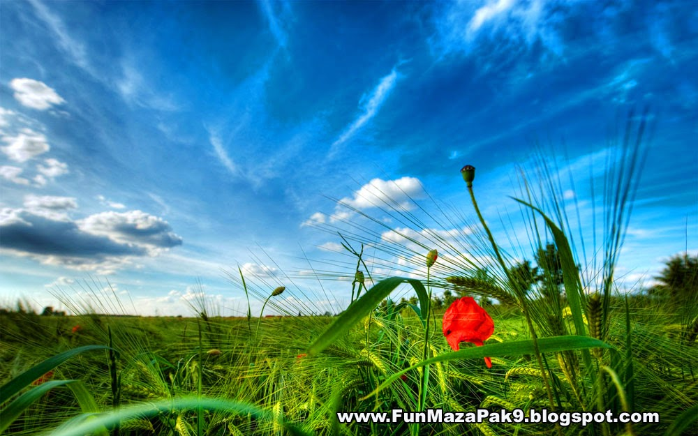 Download Nature High Definition Wallpapers 2014 Nature Pictures 1000x625