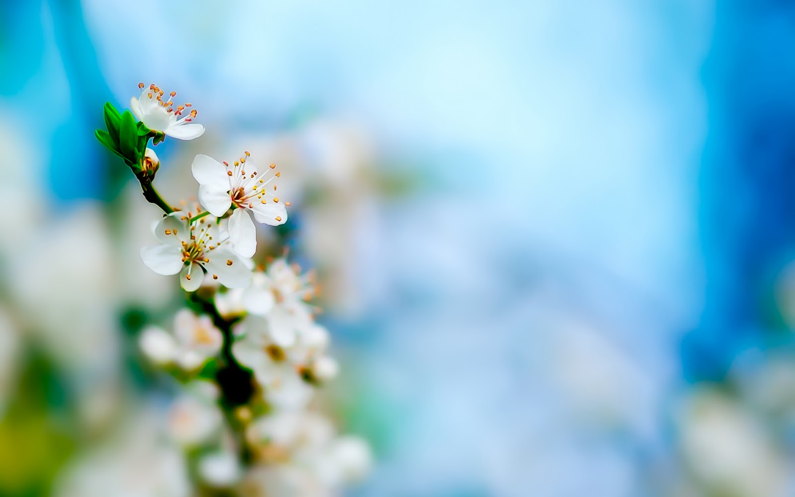 Spring white apple flowers hd wallpapers epic desktop backgrounds 1600x1000