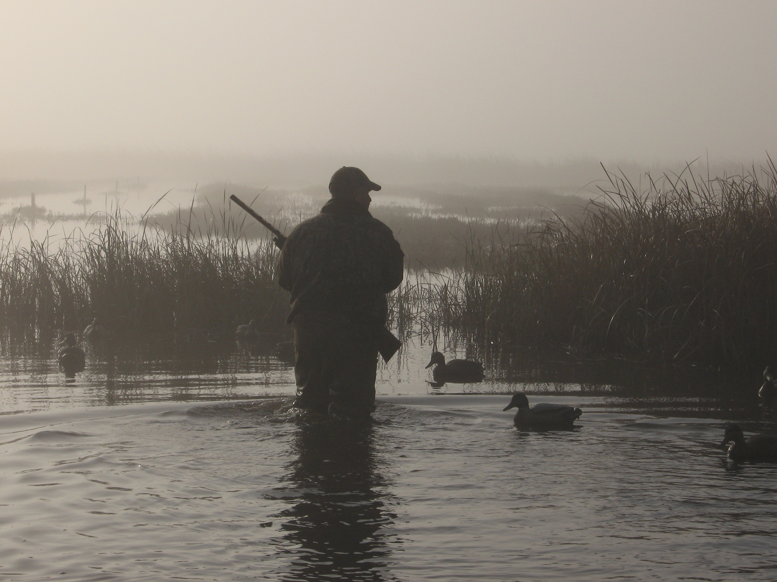 Californias 2012 waterfowl season is quickly approaching and the 2592x1944