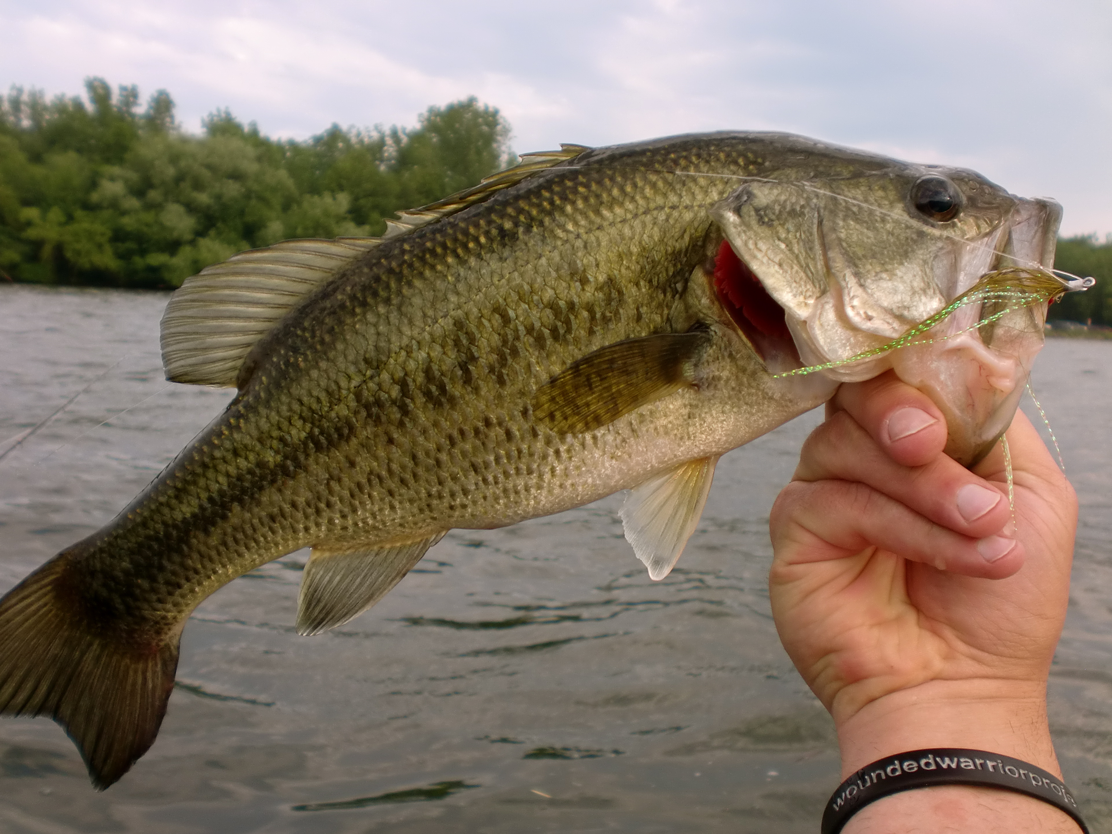 Largemouth Bass Wallpaper Images TheCelebrityPix 3842x2882