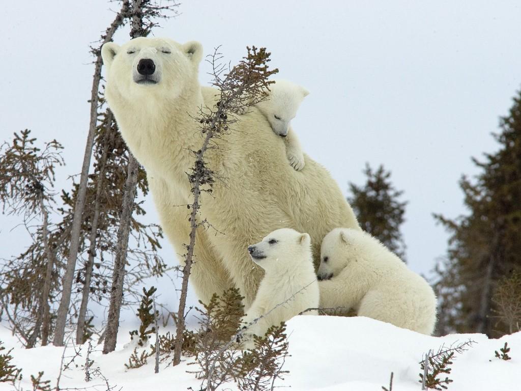 Winter Animal Desktop Wallpaper wallpaper Winter Animal 1024x768