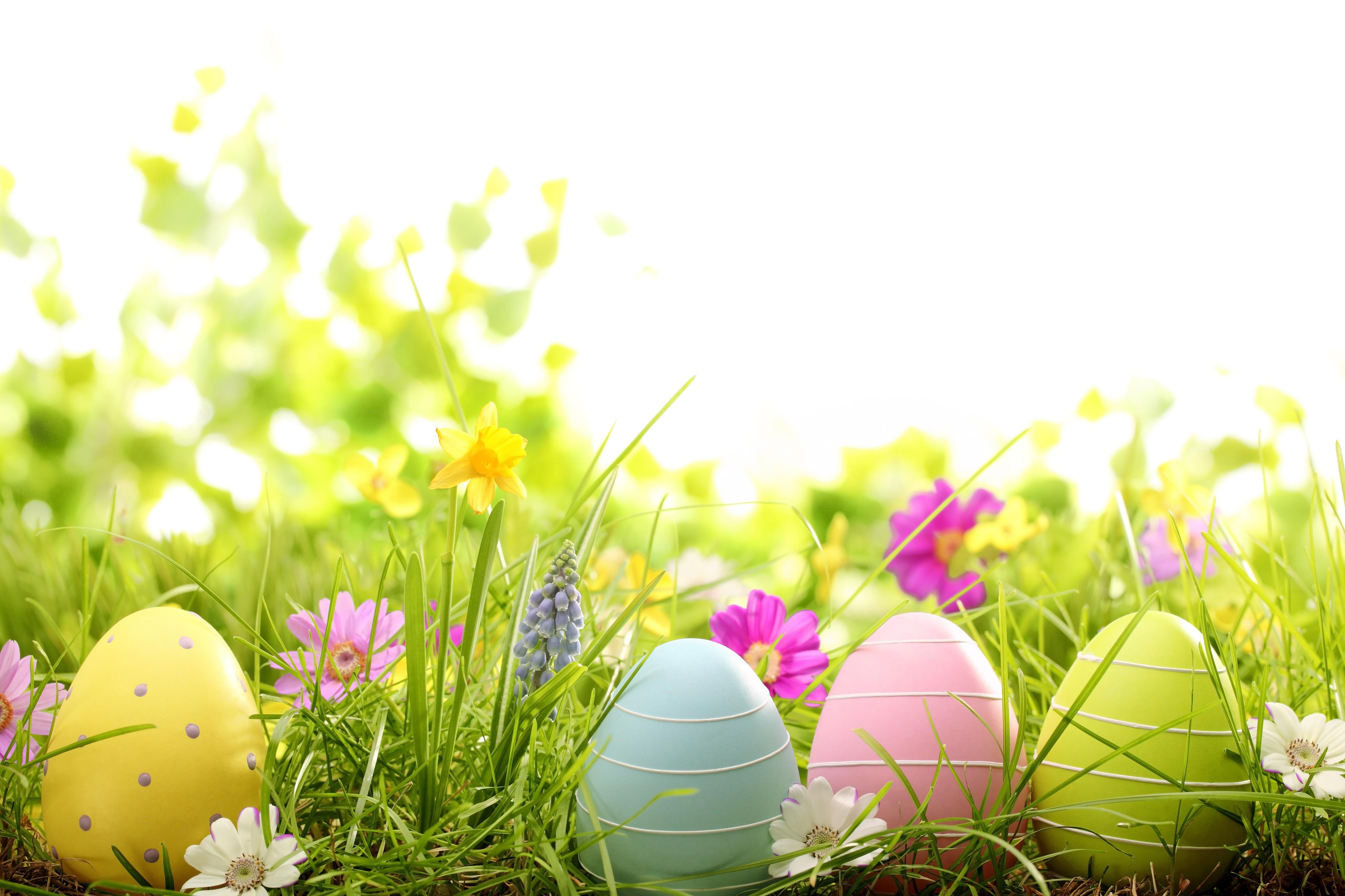 colorful easter eggs in grass wallpaper 4 Chatham Presbyterian 4520x3013
