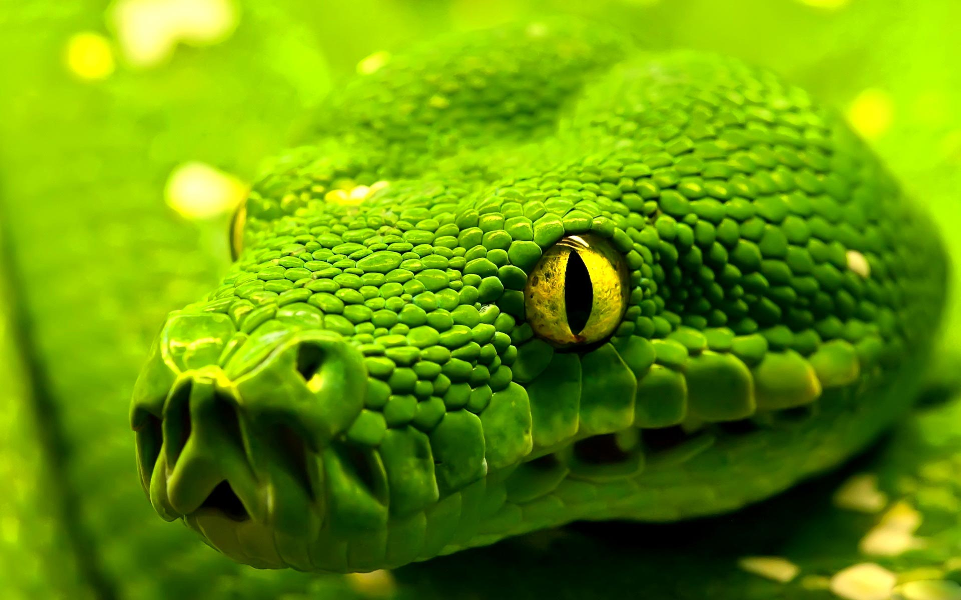 beautiful green snake hd wallpapers cool desktop background images 1920x1200