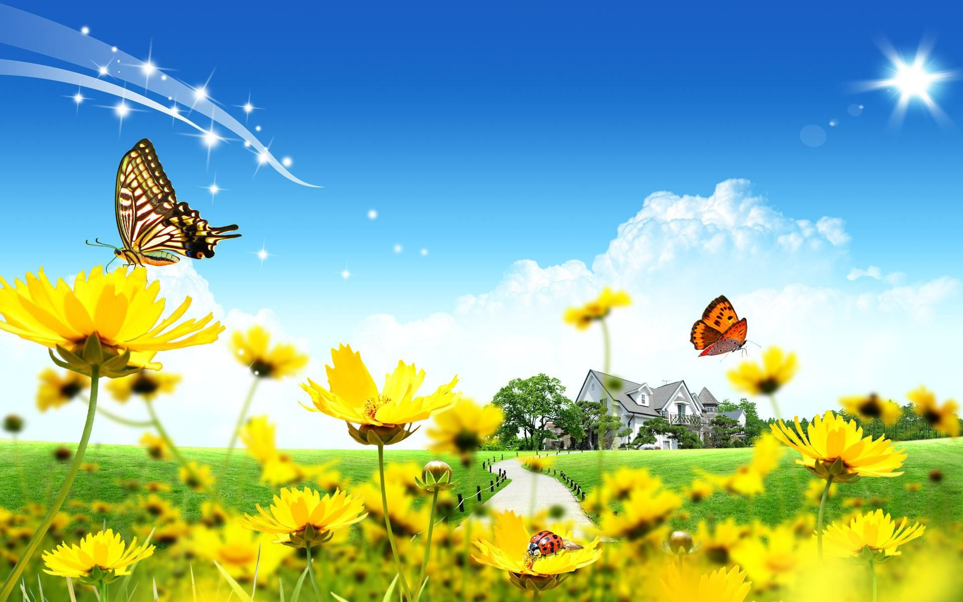 Sunny Day Wallpaper 12570 Beautiful flowers wallpapers 1920x1200