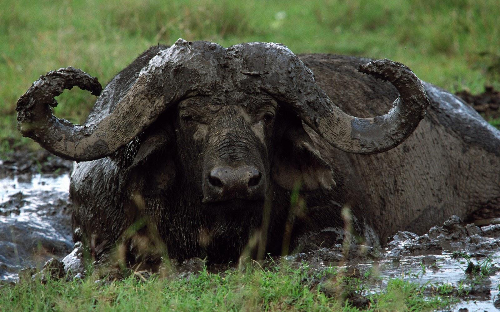 HD Wallpaper buffalo bills hd wallpapers 1600x1000