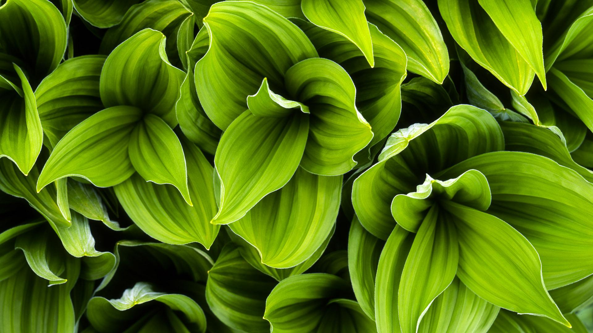 plants amp flowers wallpaper supportmicrosoftcom