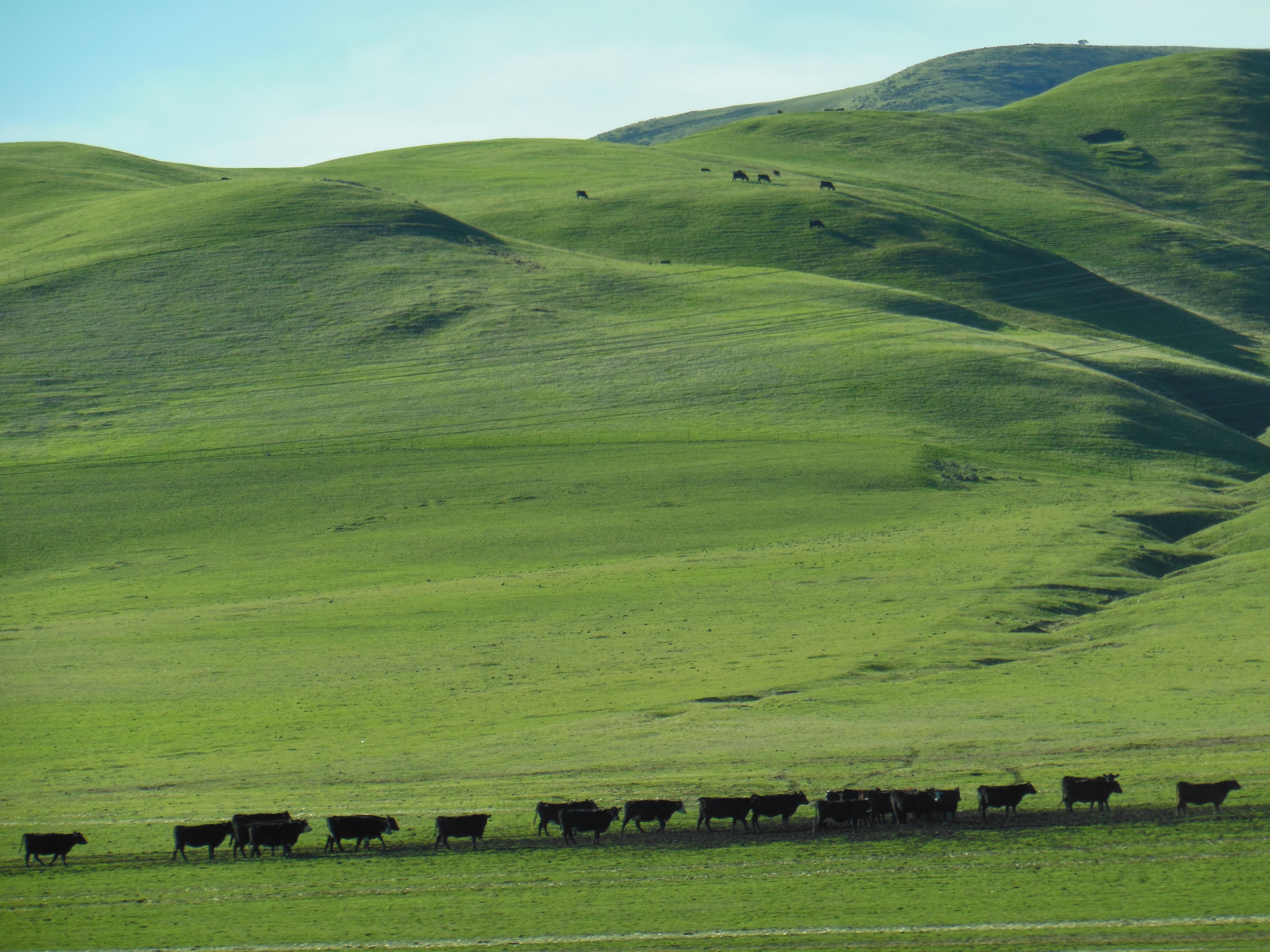 Pin Green Rolling Hills And Tree Hq Landscape Wallpaper 4608x3456