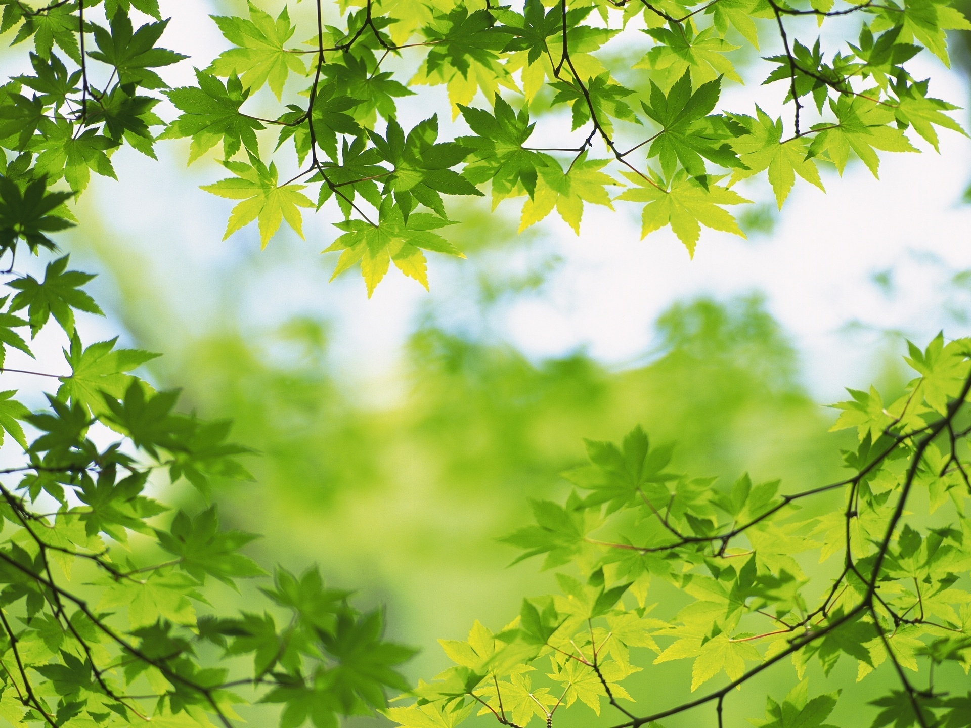 Green images Green leaves HD wallpaper and background photos 22176085 1920x1440