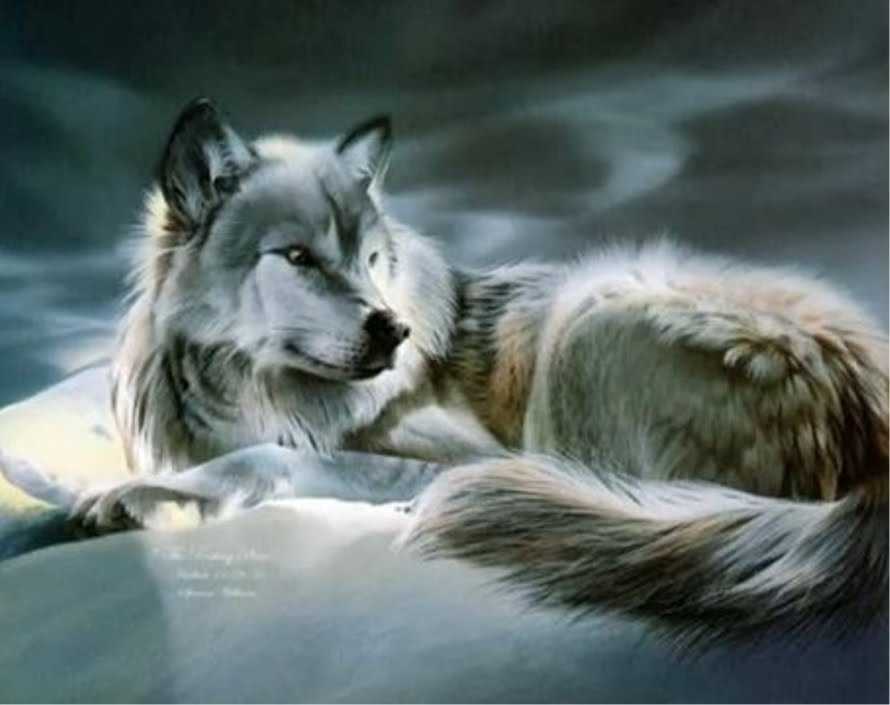Free Download Animal Photo Wolf Anime Wallpaper 890x705