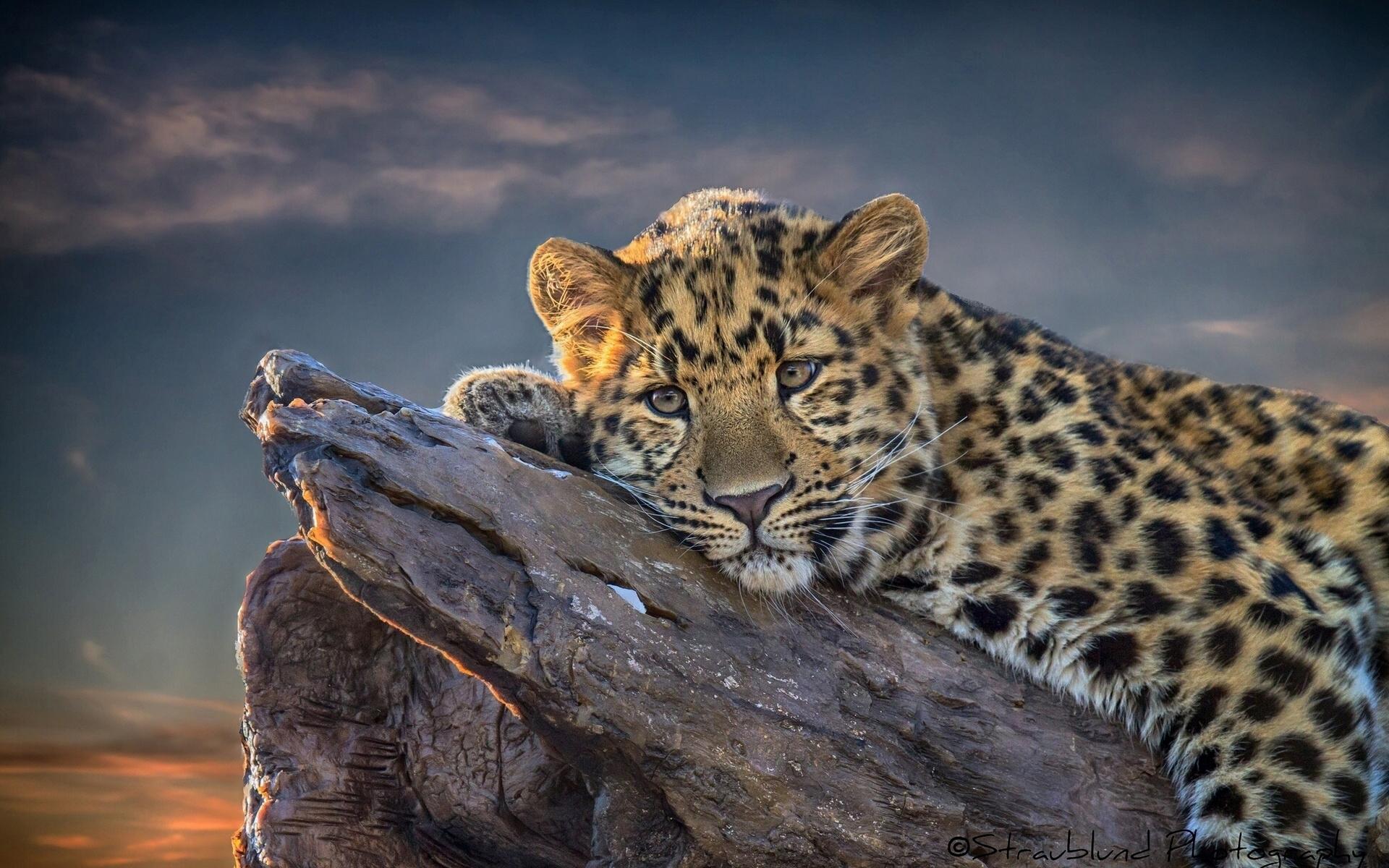 Cute Leopard Wallpaper For IPhone Wallpaper WallpaperLepi 1920x1200