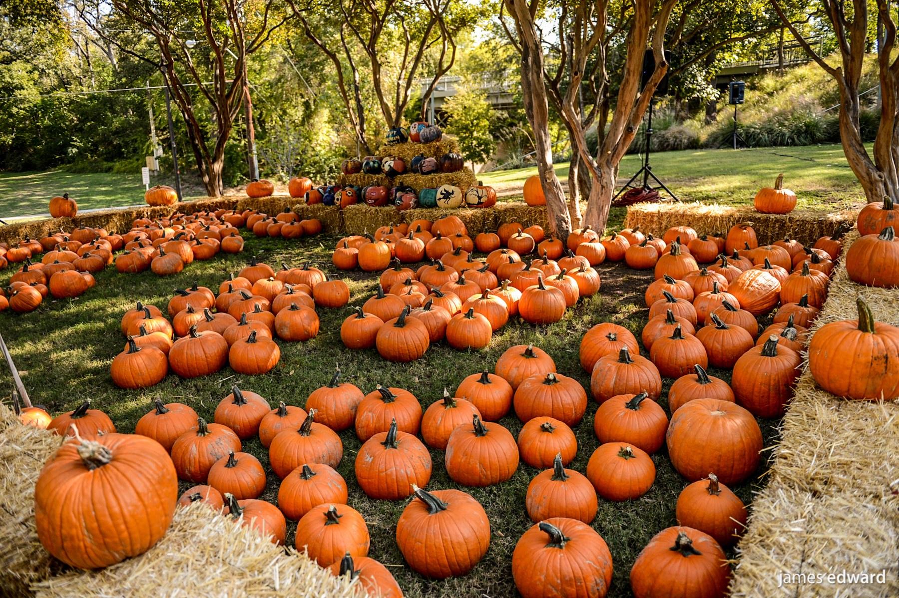 49 fall scene wallpaper with pumpkins on wallpapersafari - Pumpkin wallpaper fall ...