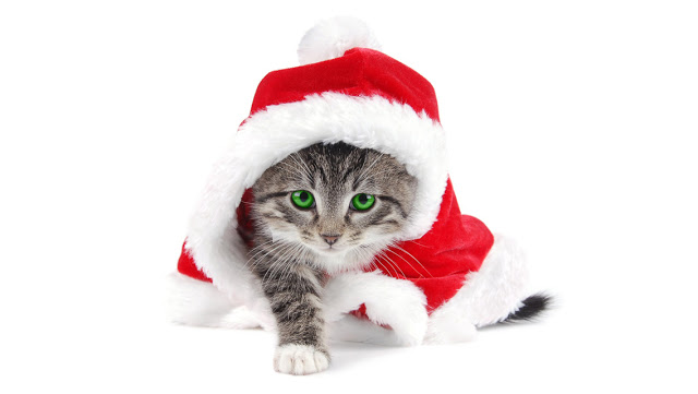 Cute Christmas Cat HD Wallpapers for iPhone 5 HD Wallpapers 640x361
