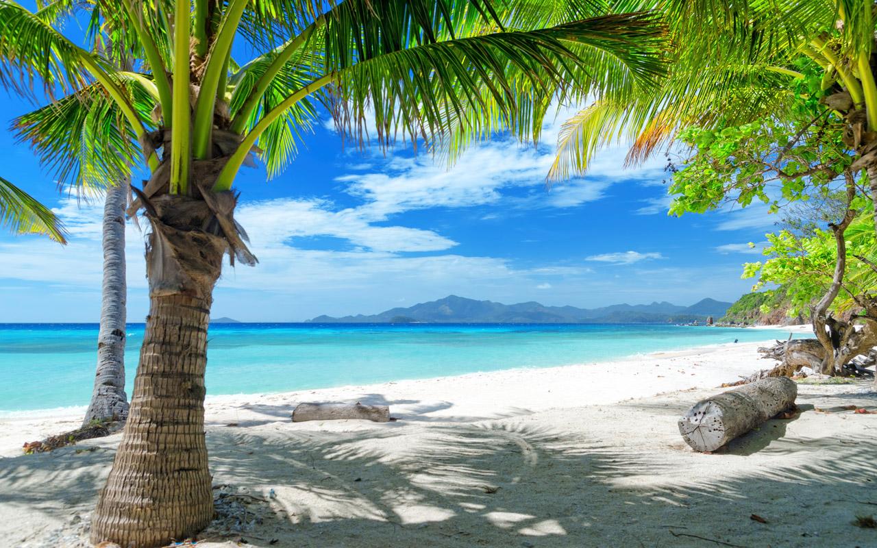 tropical theme tropical theme 1280 x 800 size