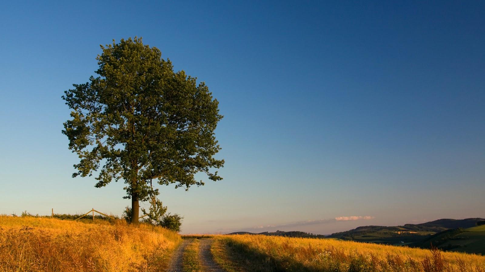17 Wonderful HD Oak Tree Wallpapers   HDWallSourcecom 1600x900
