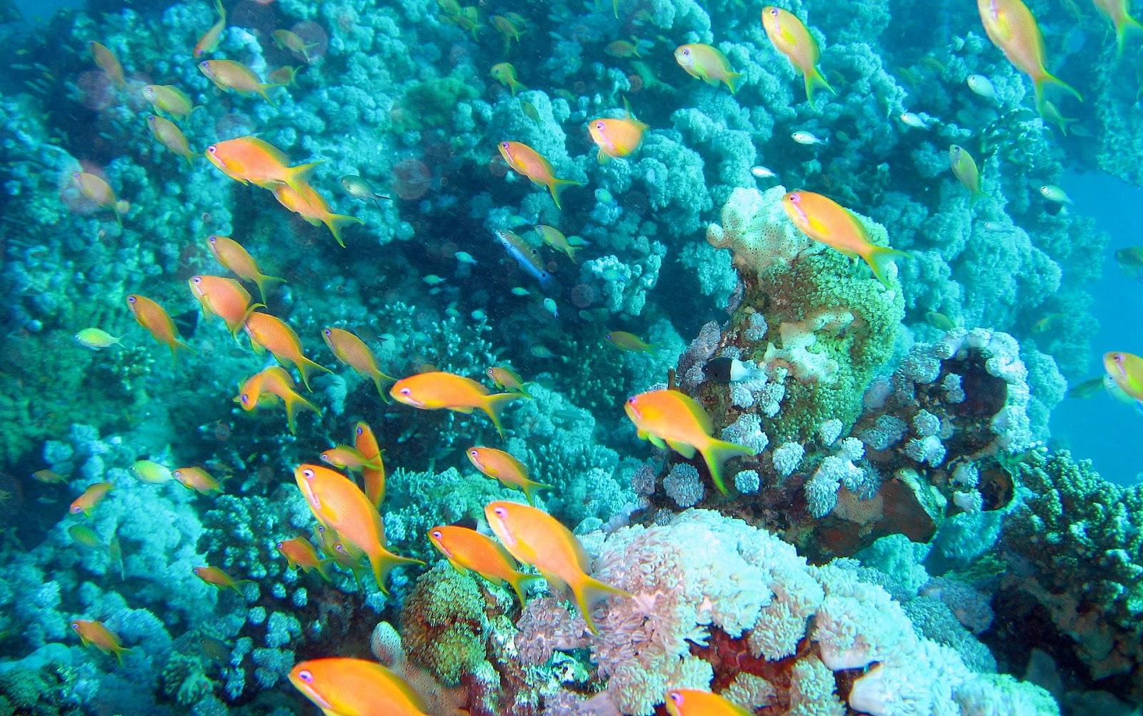 Free download aquarium wallpapers aquarium live wallpaper aquarium ...
