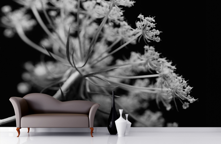 Black and White Dandelions Wall Mural MuralsWallpapercouk 764x500