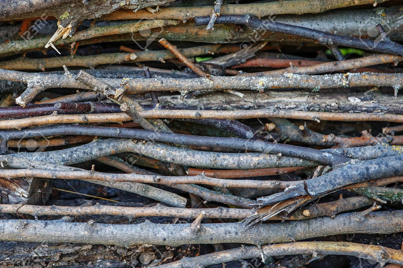 Twig Background Texture Stock Photo Picture And Royalty 1300x866